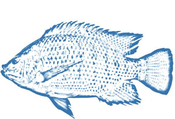 Fish Gelatin Manufacturer